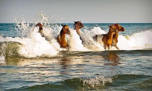 isola cavalli
