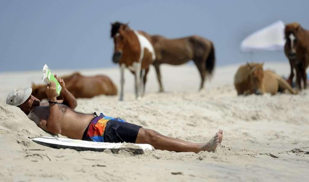 Assateague Island, l'isola popolata da cavalli liberi