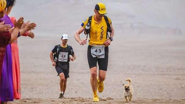 Cane randagio corre maratona in Cina inseguendo quello che sarà il suo nuovo padrone
