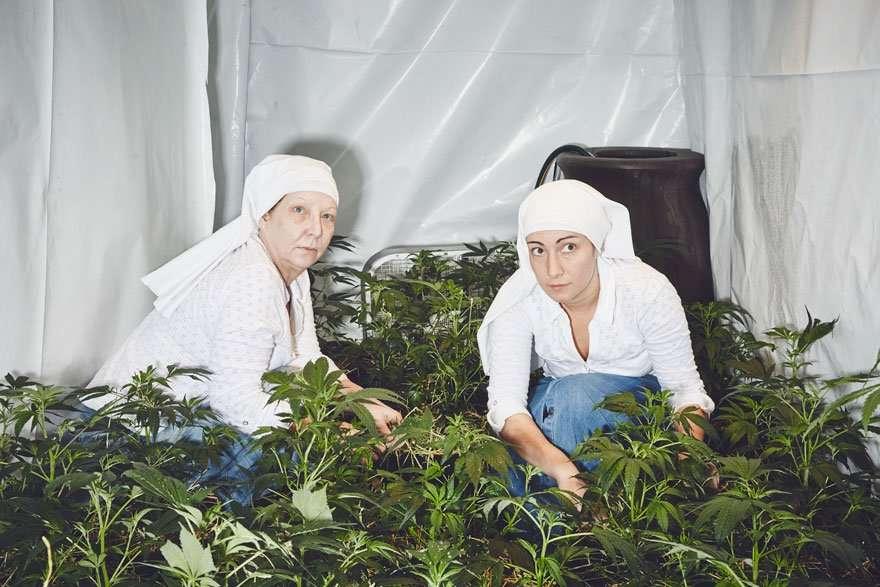 suore coltivano marijuana