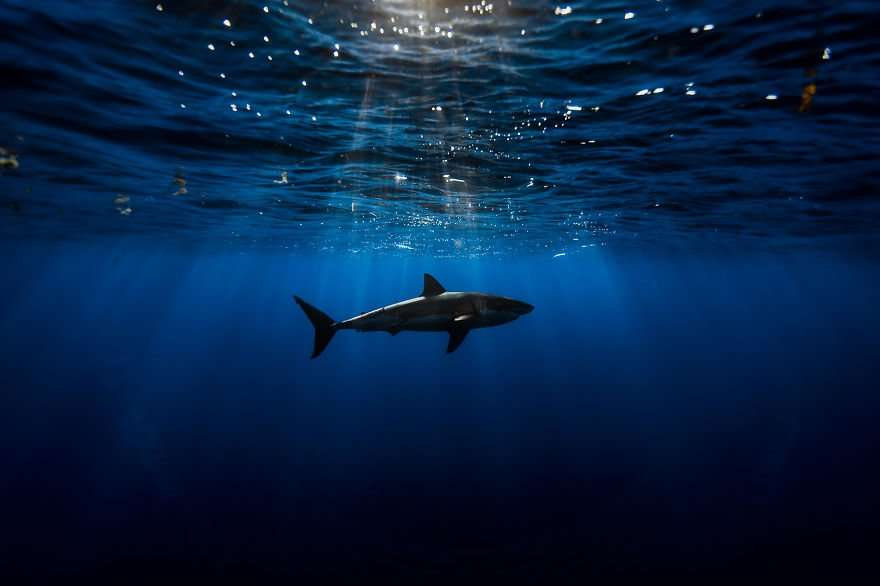 foto squali buoni e sorridenti