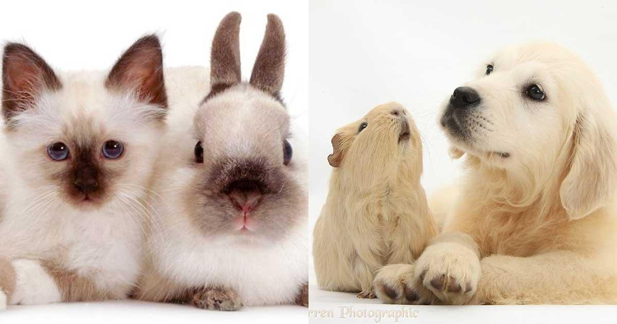 gemelli diversi mondo animale