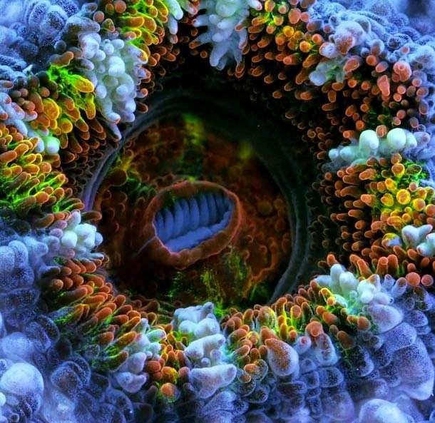 coralli e spugne di mare macrofotografia