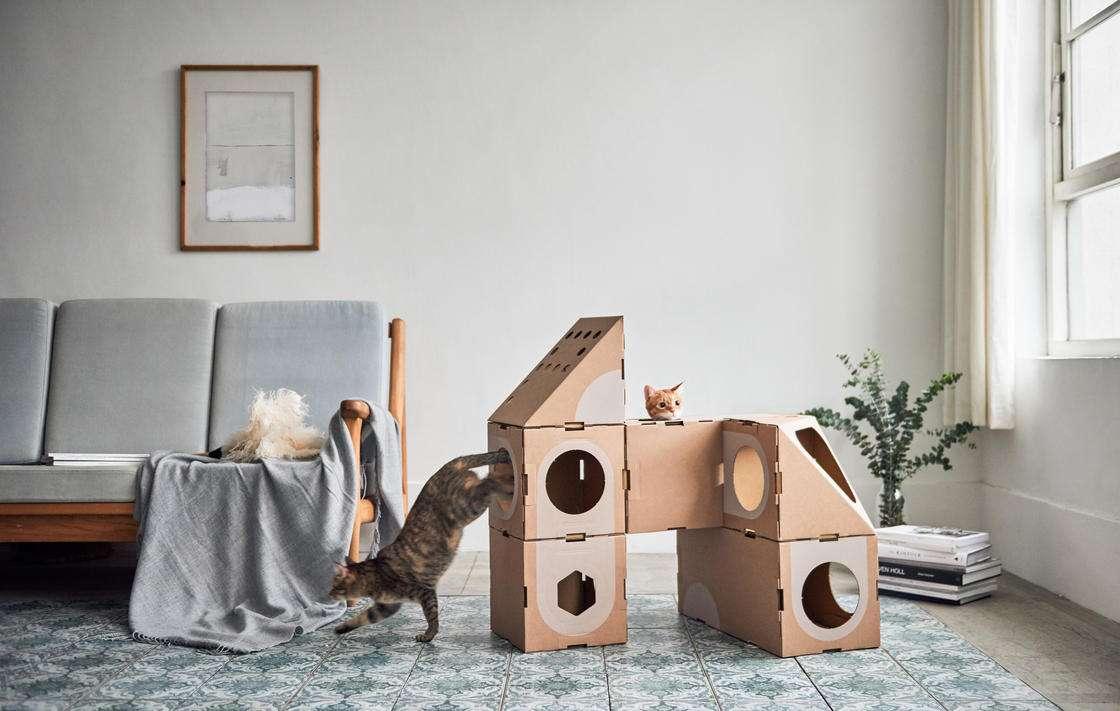 case cartone gatti