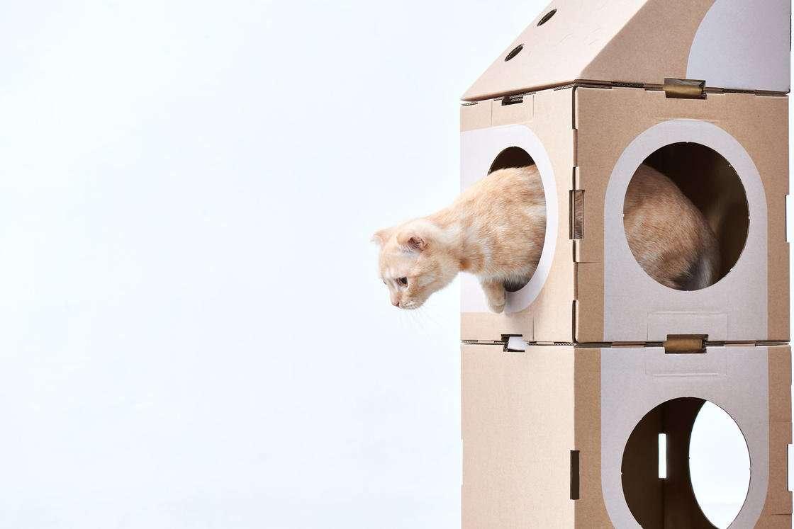 giochi per gatti in casa