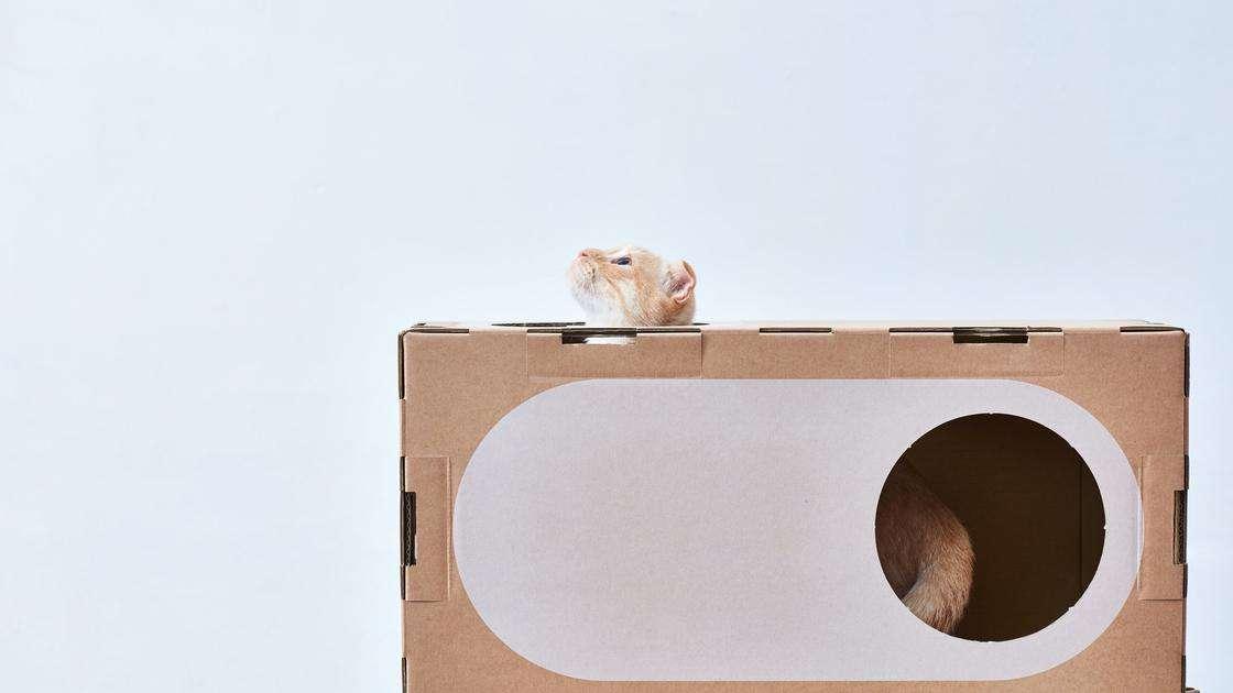 case gatti in cartone