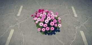 fiori buche strada