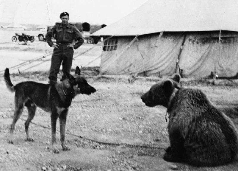 Wojtek, l'Orso che beveva birra mentre combatteva in guerra
