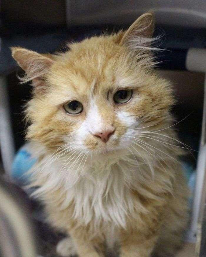 Toby, il gatto abbandonato a 20 km da casa, torna da solo e viene abbandonato di nuovo