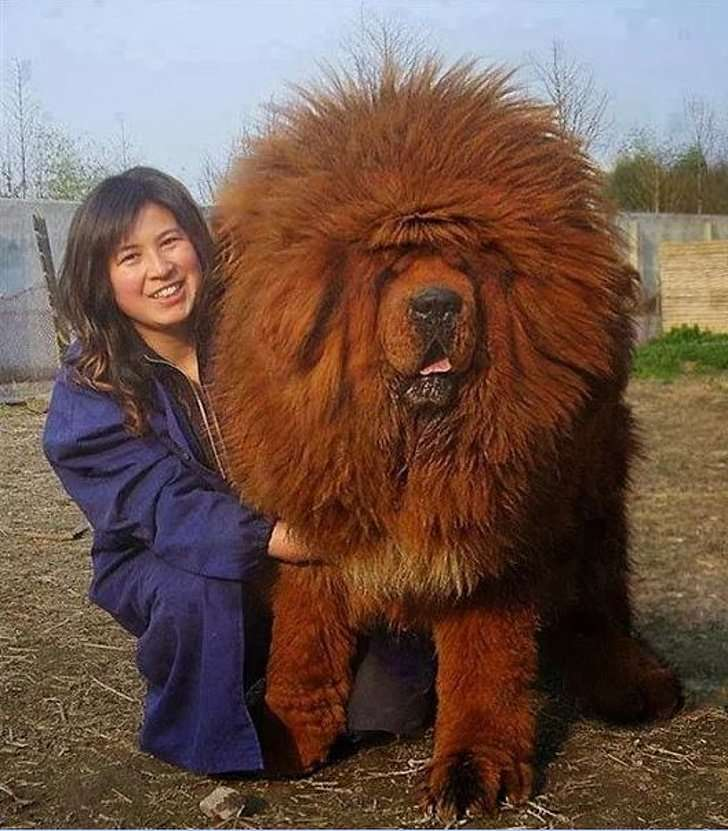 foto dei cani più grandi al mondo