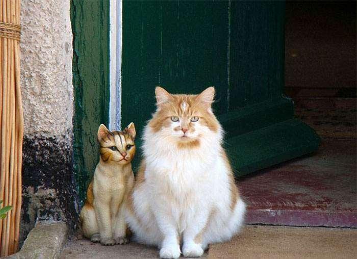 Rubble il gatto più vecchio del mondo