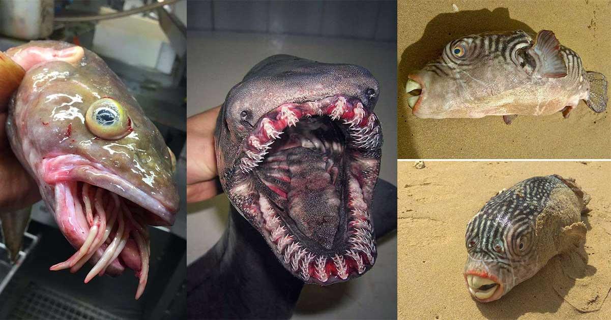 """Pesci """"alieni"""" pescati per sbaglio e fotografati prima di essere liberati"""