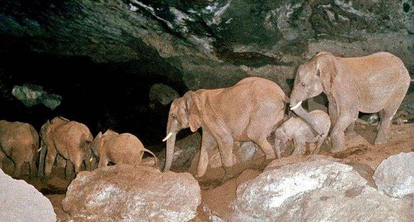 Elefanti in Africa scavano una grotta da millenni. Scopri perché lo fanno