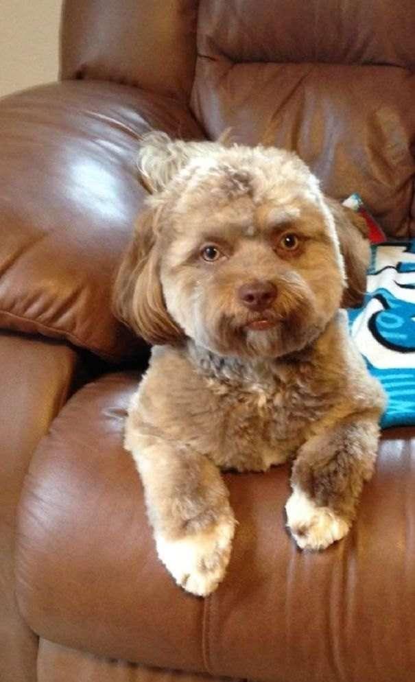 Yogi, il cane con il viso umano e nient'altro di strano