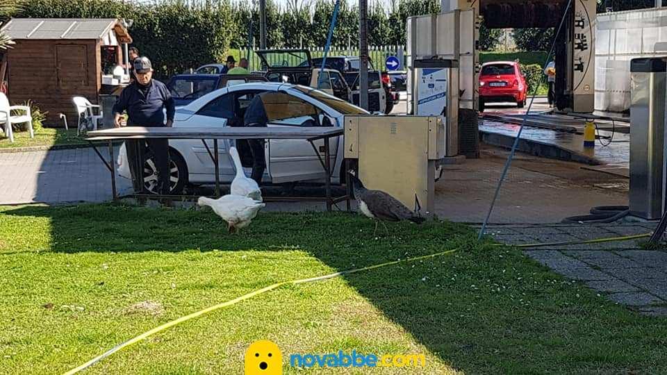 A Massa esiste un autolavaggio dove intrattenerti con animali liberi e felici: ecco l'Obelisco