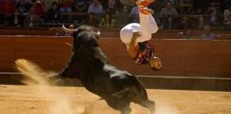 saltatori di tori