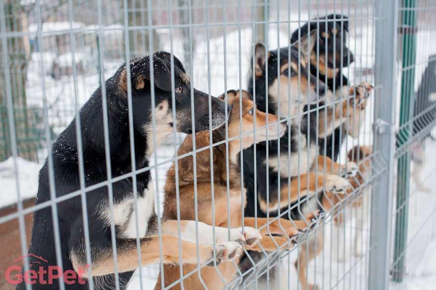 Sito di incontri per cani