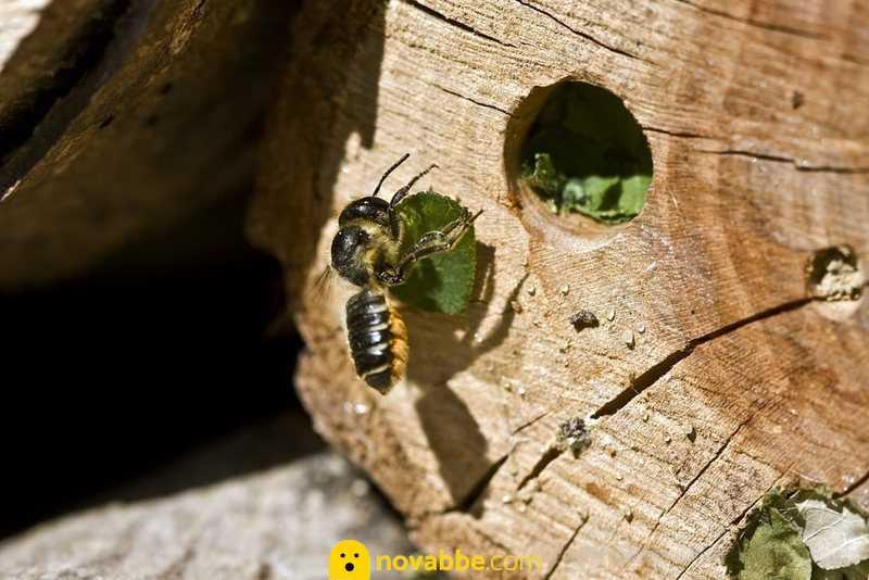 Trovato il primo nido di api costruito interamente in plastica
