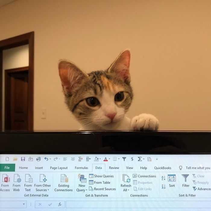 """Ecco Credit e Debit, i gattini """"assunti"""" in ufficio per potenziare il morale e ridurre lo stress"""