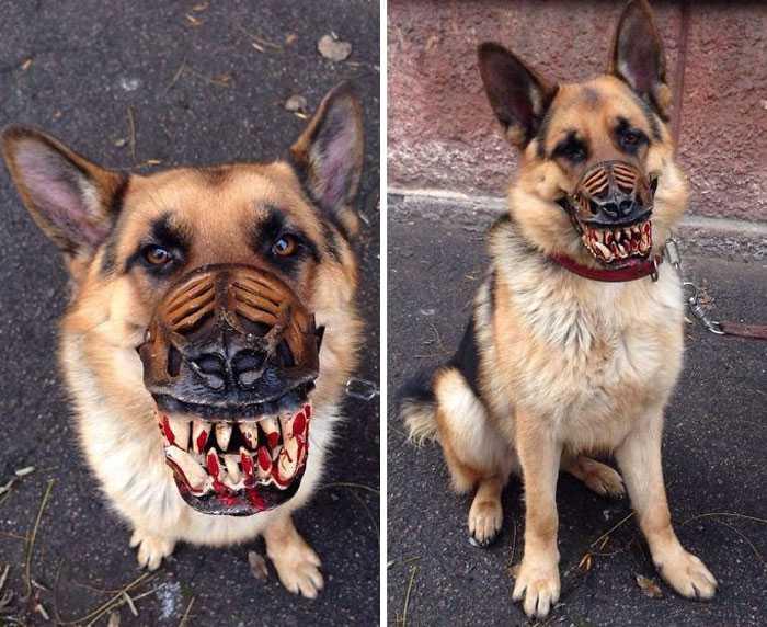 museruola cane zombie amazon