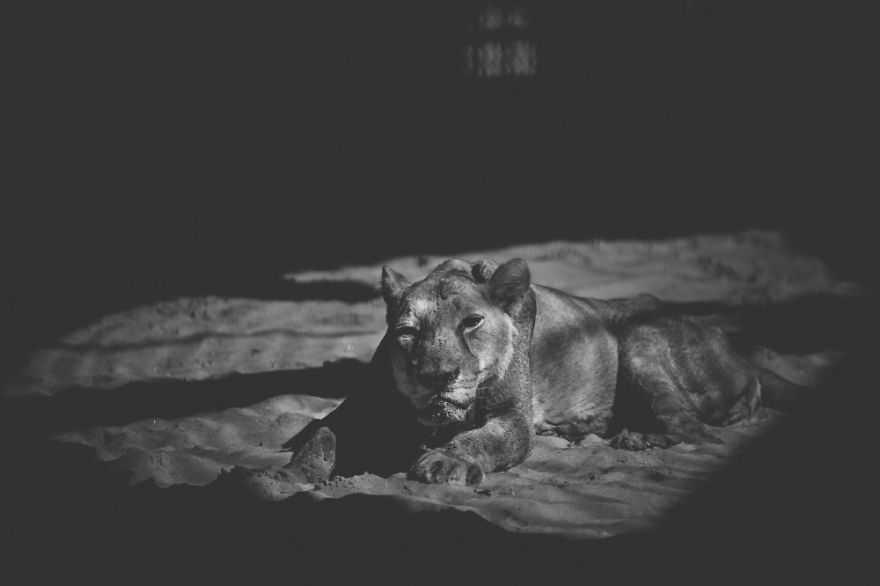 foto strazianti zoo