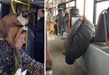 personaggi in autobus