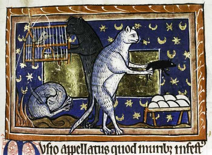 Il mistero dei gatti che si leccano il culo nei quadri medievali