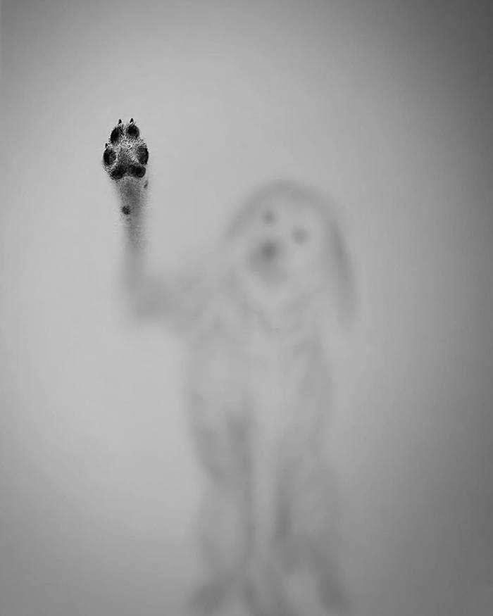Umano Suddividere Romano Disegni Animali A Matita Amazon Agingtheafricanlion Org