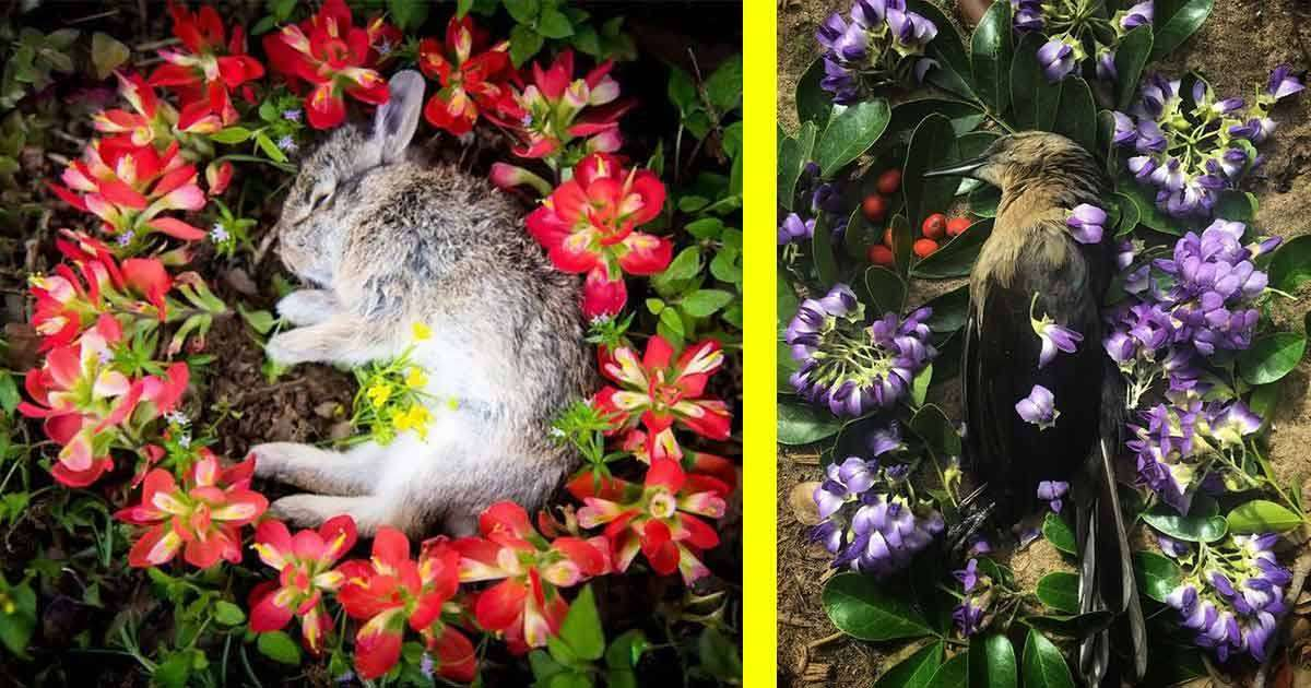 animali morti fiori