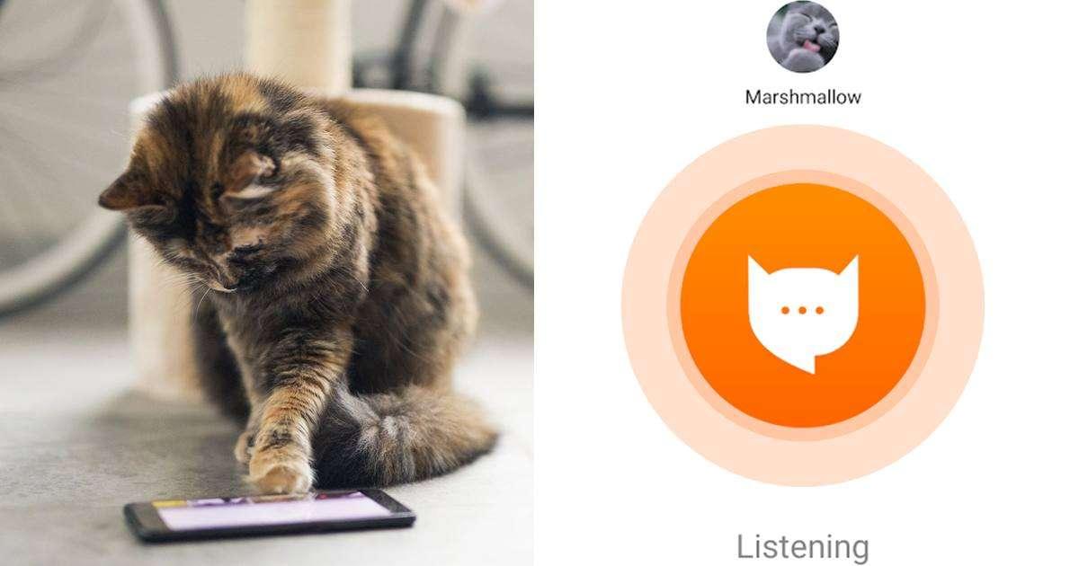 applicazione traduce miagolio gatti
