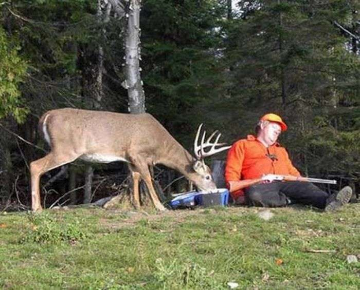 cacciatore cervo ruba fucile