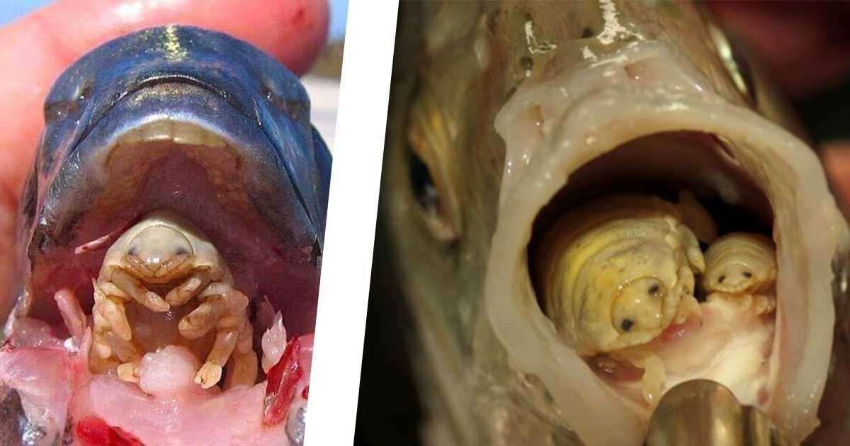 parassita lingua pesci