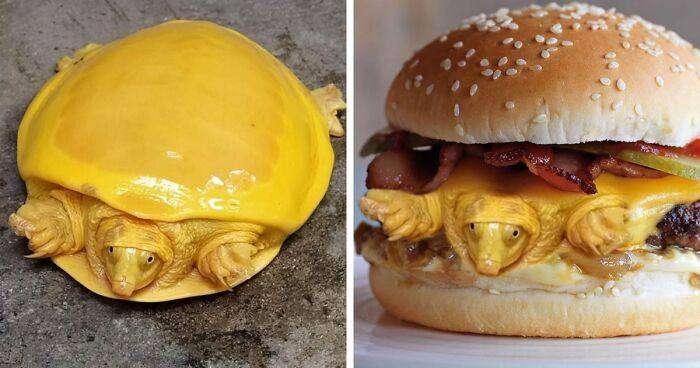 tartaruga formaggio