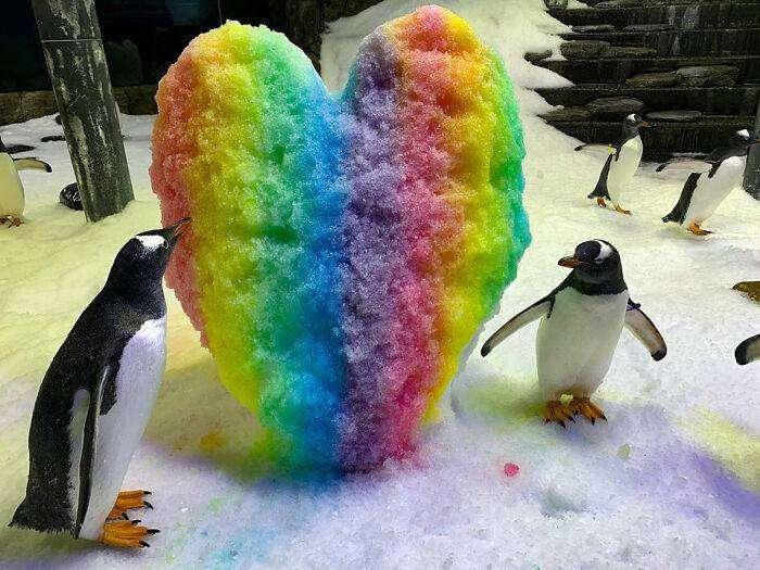 coppia di pinguini gay
