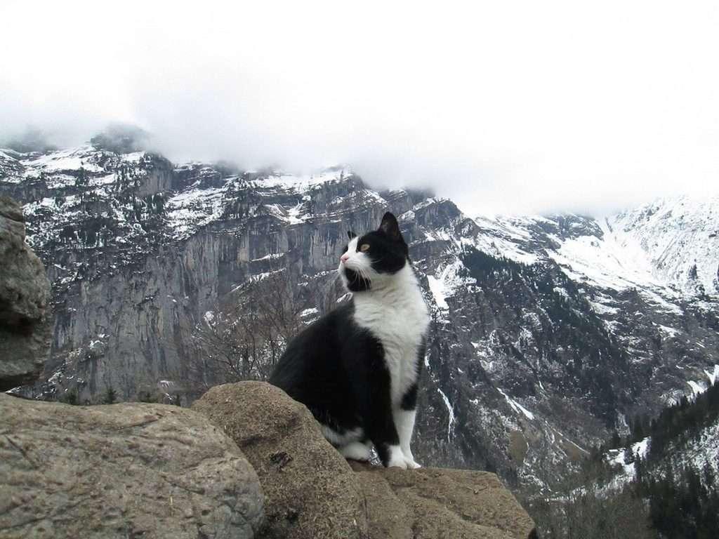 gatto salva uomo montagne svizzere