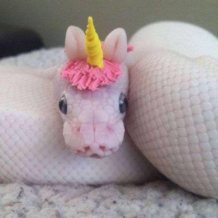 I cappelli per serpenti spopolano sul web. Ecco la community dedicatagli