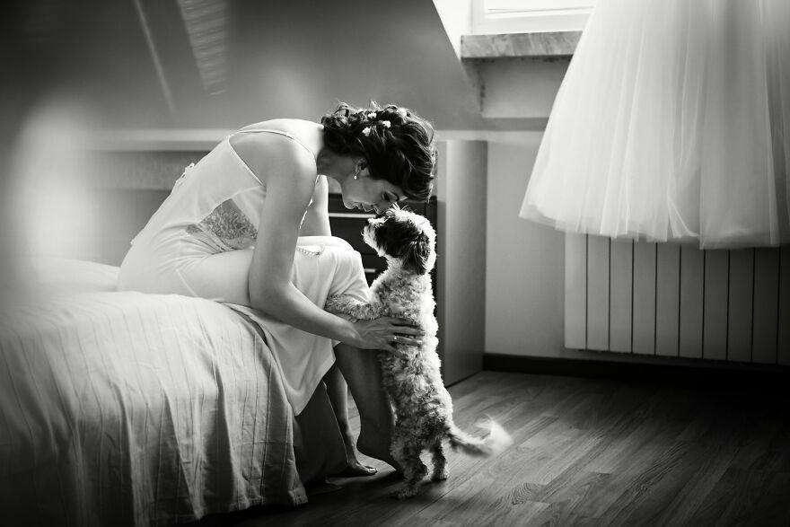cani ai matrimoni