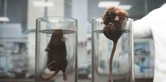 esperimento topi annegano speranza