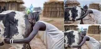 tribu sori soffia vagina vacca