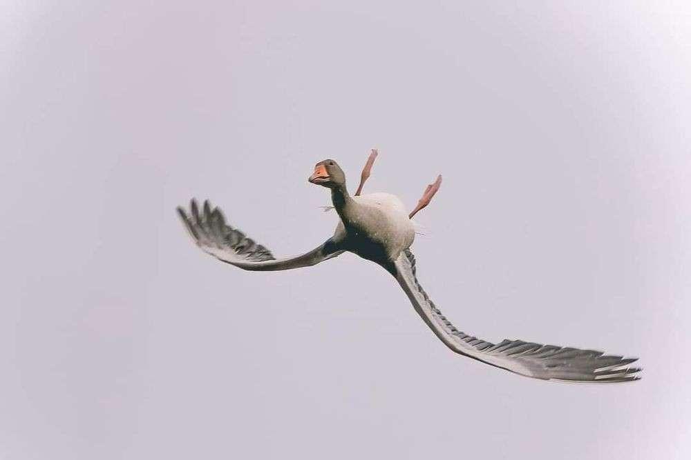uccelli volano capovolti