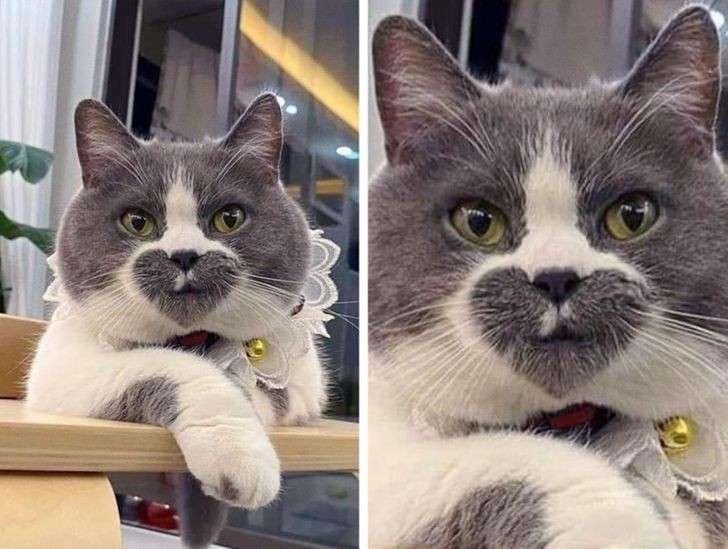 Guardate il muso di questo gatto, sembra aver stampato un cuore. Irresistibile.
