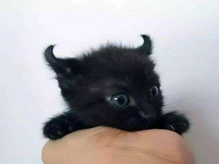 Il diavoletto nero con tanto di orecchie a corna.